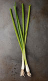 Green Onions on Metal Cooking Sheet Royalty Free Stock Photos