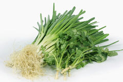 Green onions and parsley Royalty Free Stock Photos