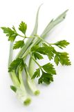 Green onions and parsley Stock Images