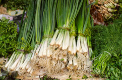 Green onions, parsley and dill on the market on the counter. Royalty Free Stock Photo