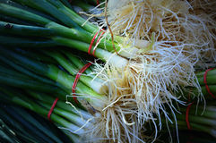 Green Onions  Stock Images