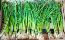 Green onions for sale Stock Photo