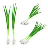 Green onions set isolated on white vector Stock Photography