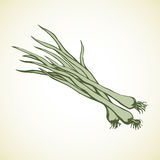 Green onions. Vector drawing Stock Images