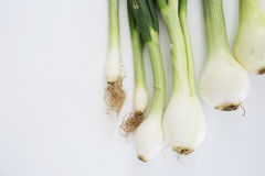 Green onions on white background Stock Photography