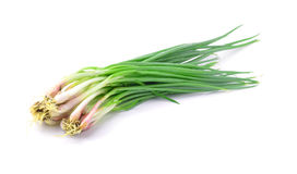 Green onions on a white background Stock Photos