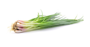 Green onions on a white background Royalty Free Stock Photo