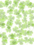Green Opaque Clover Leaves Background. A background pattern featuring green opaque clover leaves Stock Photo