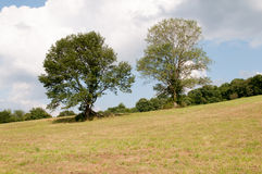 Green open space with mature trees on a sunny day with light clouds at Stroud Preserve Stock Photos