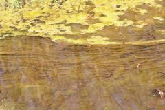 Green and orange algae on the river. Pollution of the environment. Royalty Free Stock Image