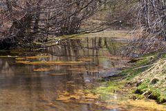 Green and orange algae on the river. Pollution of the environment. Stock Photography