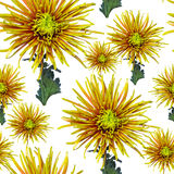 Green orange chrysanthemum flower seamless Stock Photos