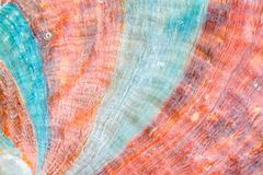 Green and orange close up of sea shell surface texture.  Royalty Free Stock Image