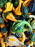 Green and orange decorative gourds Royalty Free Stock Photography
