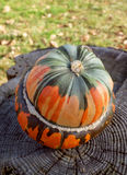 Green and orange French turban squash on a weathered tree stump. Autumn leaves and grass beyond Stock Image
