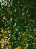 Green-and-orange Leaves stock images