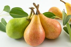 Green and orange pears and a pear  branch on white backgrround Royalty Free Stock Photo