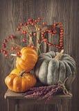 Green and orange pumpkins Royalty Free Stock Photo