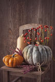 Green and orange pumpkins Stock Photography