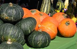 A Variety of Squash for Sale Royalty Free Stock Photography