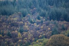 Tree tops in a forest. Green and orange tree tops in a forest stock photography