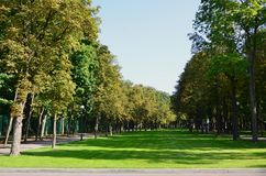 Green and orange trees in beautiful park. Floral and natural autumn landscap. E Royalty Free Stock Images