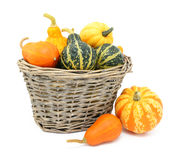 Green, orange and yellow ornamental gourds in a basket Stock Image