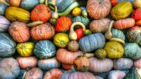 Green Orange and Yellow Pumpkins Stock Photos