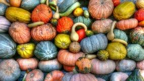 Green Orange and Yellow Pumpkins Stock Photos