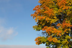 Green, Orange and Yellow Tree. In the fall Royalty Free Stock Photography