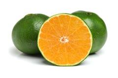 Green Oranges. Stock Photos