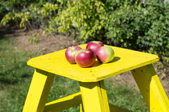 Green orchard with yellow wooden ladder Stock Images