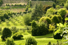 Green orchards in high town, Bergamo Royalty Free Stock Images