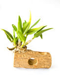 Green orchid leaf. With log Stock Photos