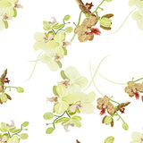 Green orchid seamless vector pattern Stock Photos