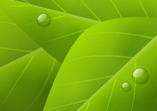 Green organic background Stock Photos
