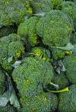 Green,organic broccoli in a pile on a market. stock photography