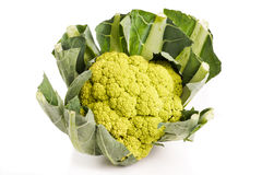 Green organic Cauliflower head Royalty Free Stock Image