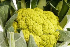 Green organic Cauliflower head Royalty Free Stock Photos