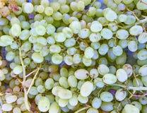 Green organic grapes closeup Stock Photo