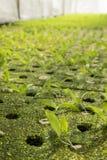 Green organic greenhouse Stock Photos