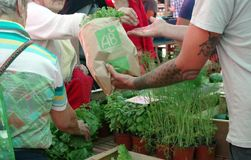 Green organic herbs for sale on a morning fresh market. French organic logo on the paper bag: AB. stock images