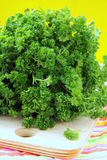 Green, organic parsley Stock Images