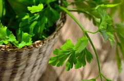 Green, organic parsley Royalty Free Stock Images