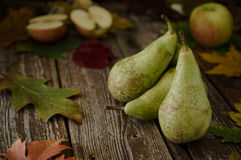 Green organic pears and apples on rustic wood table. Green Concorde variety organic pears and apples on rustic wood table with autumn, fall decorations Royalty Free Stock Images