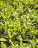 Green organic plants Stock Photos