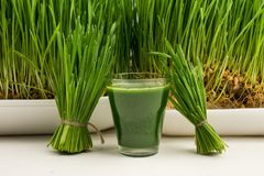 Green organic wheat grass drink over white wood background,young grass stage. Fresh juice. royalty free stock photo