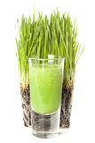 Green Organic Wheat Grass Shot Stock Photo