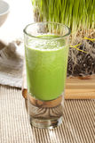 Green Organic Wheat Grass Shot. Ready to drink Royalty Free Stock Images
