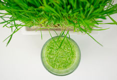 Green Organic Wheat Grass Shot ready to drink Stock Images